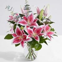 4859 - Stargazer Lilies