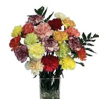 2712 - Mixed Carnations