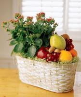 5583 - Fruit and Plant Basket