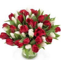 5690 - Holiday Tulips