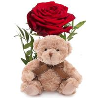 5155 - Single Rose and Teddy Bear