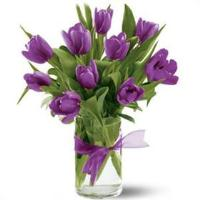 2639 - Purple Tulips